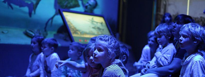 observatori blau infants